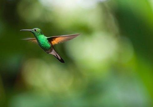Tämän kuvan alt-attribuutti on tyhjä; Tiedoston nimi on hummingbird-2139278__340.jpg